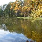 Zámecký rybník 3